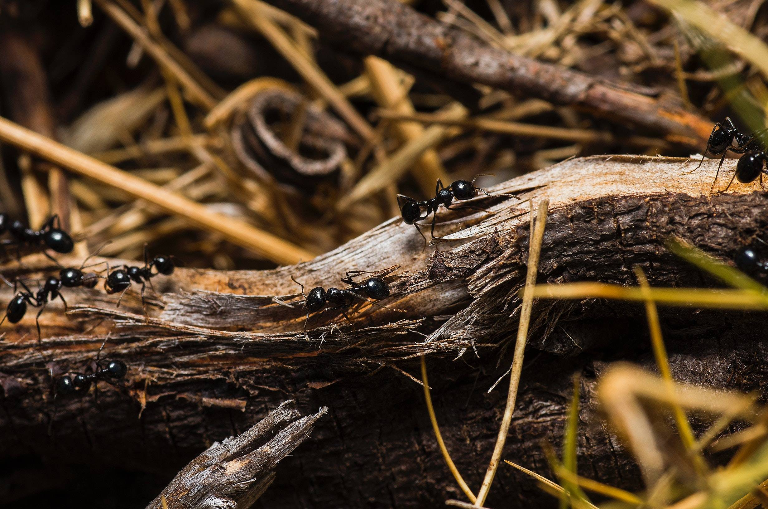 How to get rid of ants inside your house   Rocklin Pest Control