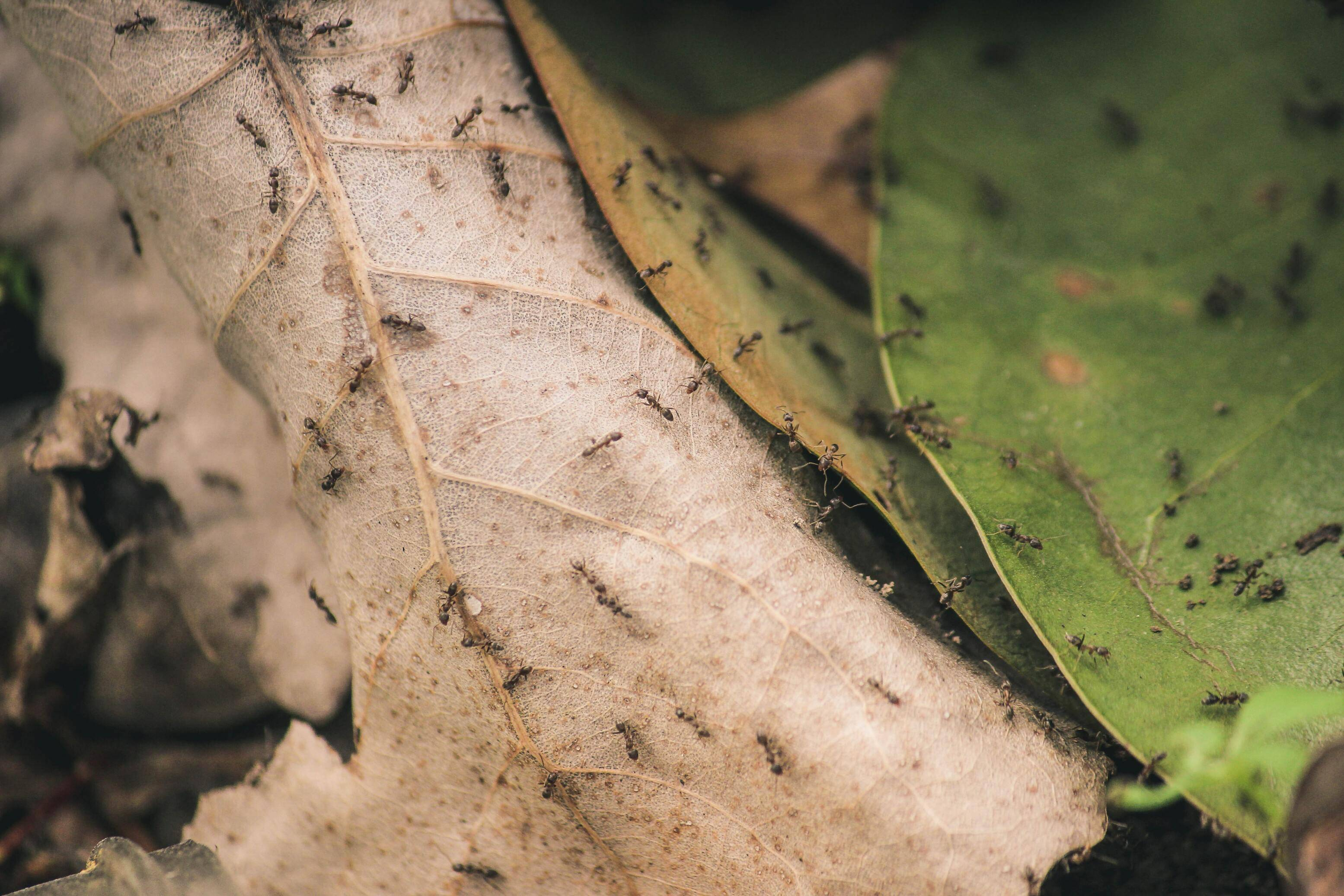 How to get rid of ants this Spring   Rocklin Pest Control