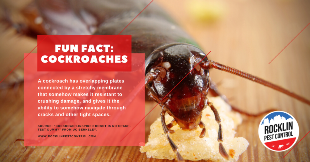 A fun fact about cockroaches | Summer pest control tips from Rocklin Pest Control.