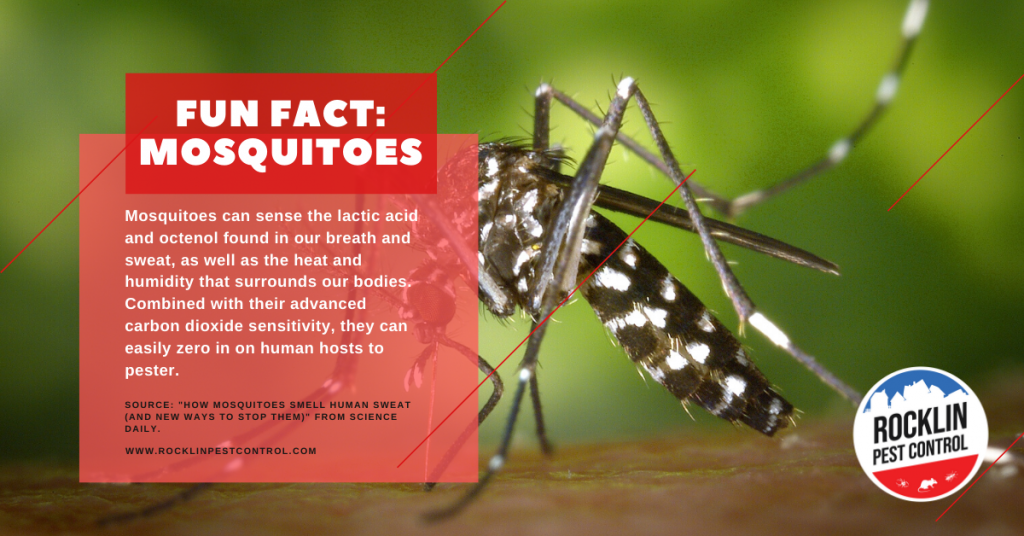 A fun fact about mosquitoes | Summer pest control tips from Rocklin Pest Control.