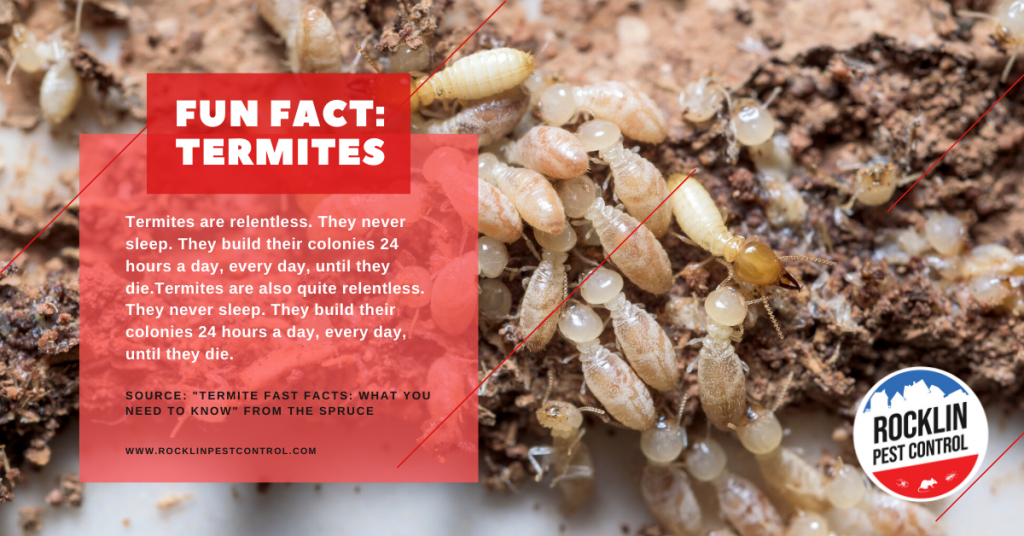 A fun fact about termites | Summer pest control tips from Rocklin Pest Control.