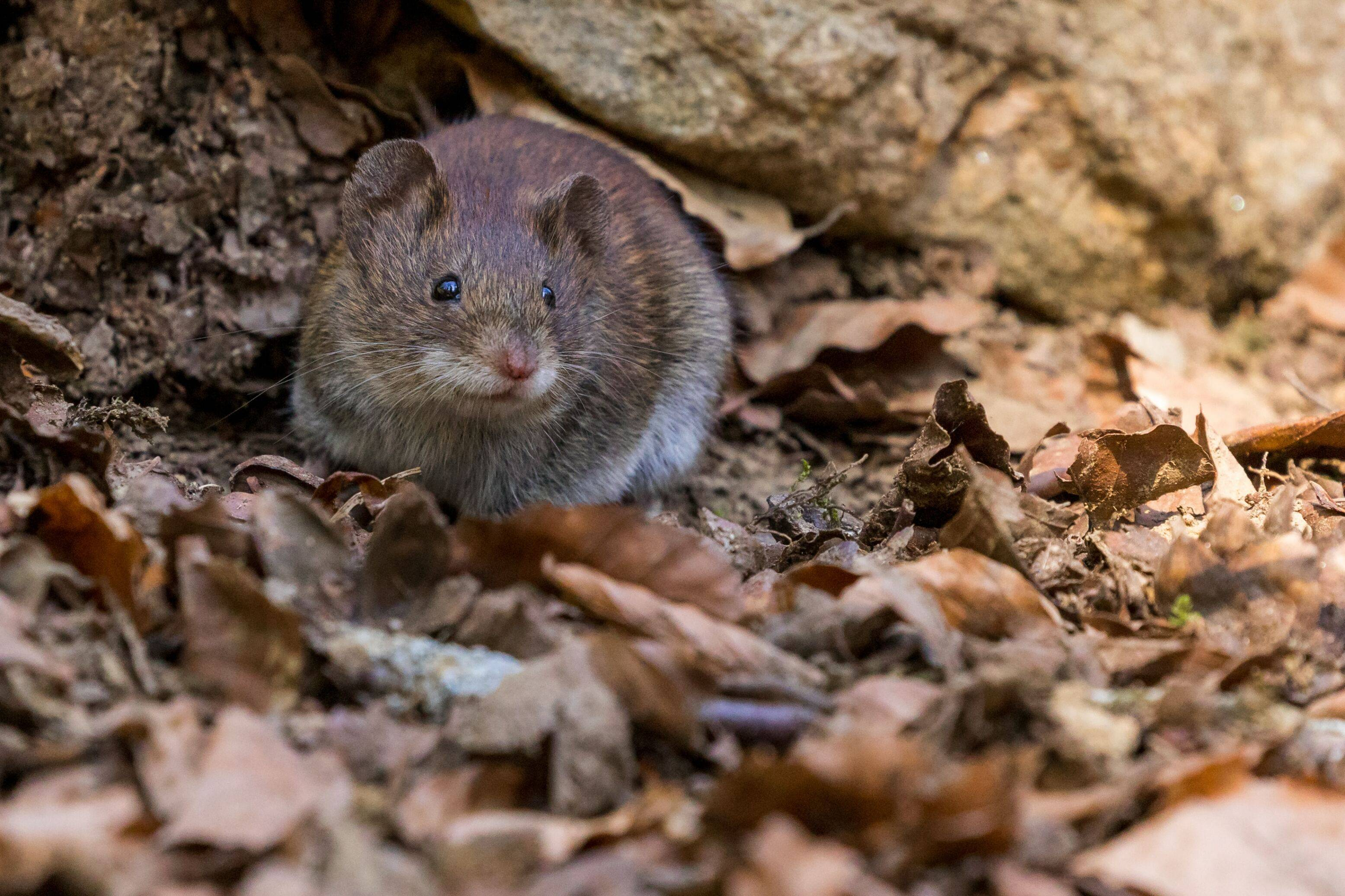 Why Fall Pest Control is Important for Homeowners This Season   Rocklin Pest Control