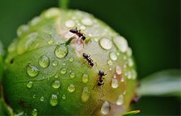 5 Pests That Come Out in the Rain in California   Rocklin Pest Control