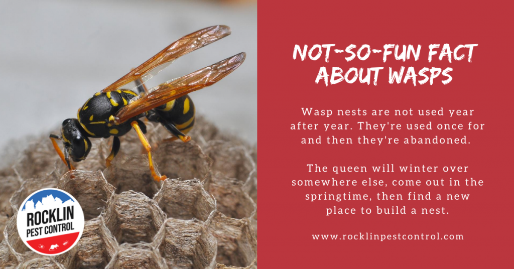 A graphic with trivia about wasps | Rocklin Pest Control