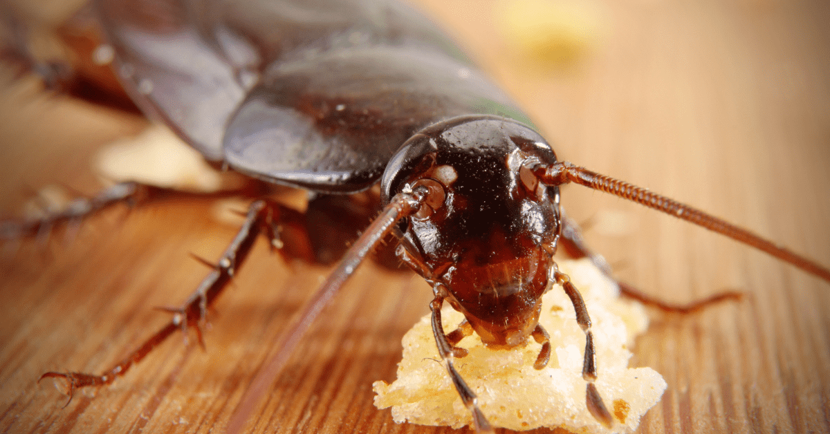 How Do I Keep My Business Safe From Cockroaches? | Rocklin Pest Control
