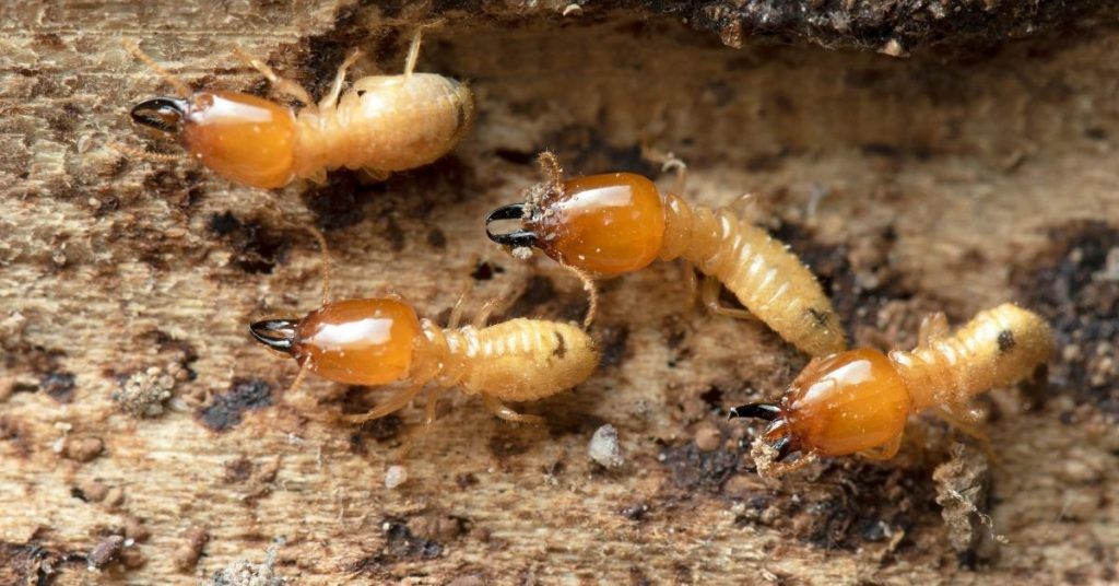 What Are the Most Common Pests in the Spring?