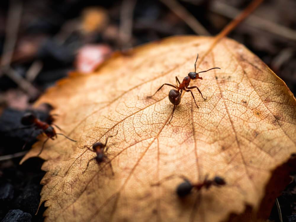 Fall Pest Control Treatment: Why You Need One for Your Home